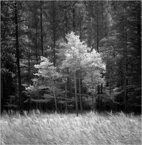 Reg Mathews - Woodland Light - Advanced Mono DPI