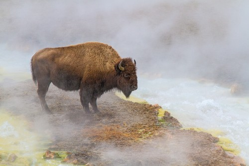 2nd Peter-Clark-Bison-Warming