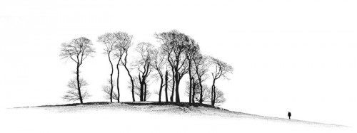 David Byrne awarded a FIAP Gold for The Copse