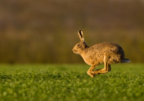 The advanced winner was 'Racing Hare' by Mark Davies