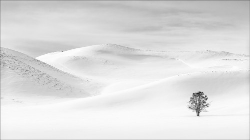 Winter Isolation by Peter Clark