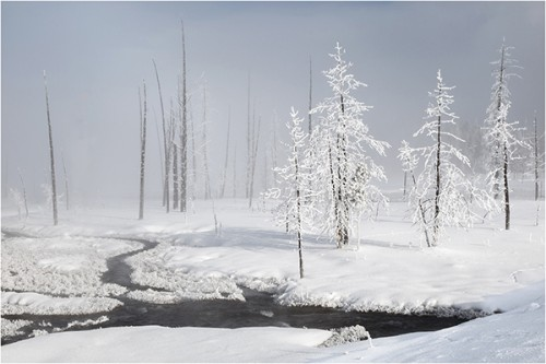 Yellowstone Mists