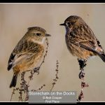 00_Stonechats on the Docks_Bob Cooper