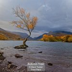 02_Autumn Tree_Dave Tucker