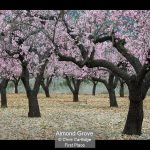 00_Almond Grove_Chris Cartlidge
