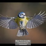 08_Blue Tit In Crucifix_Richard Moorse