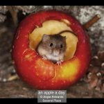 08_an apple a day_Angie Edwards