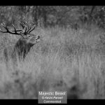 00_Majestic Beast_Kevin Parcell