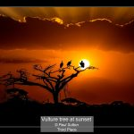 13_Vulture tree at sunset_Paul Sutton